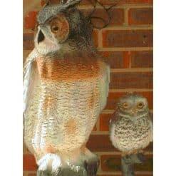 Ollie the Owl - Image